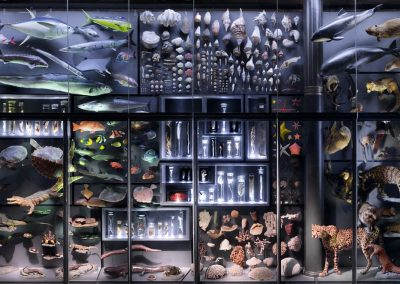 The biodiversity wall within the museum